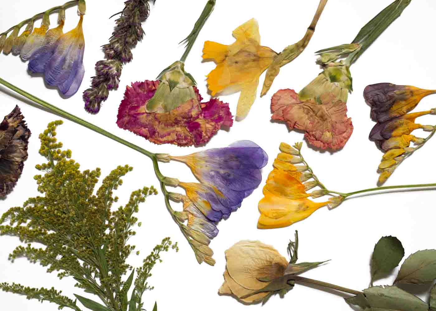 Drying flowers: the final results are perfect for garnishing gifts.