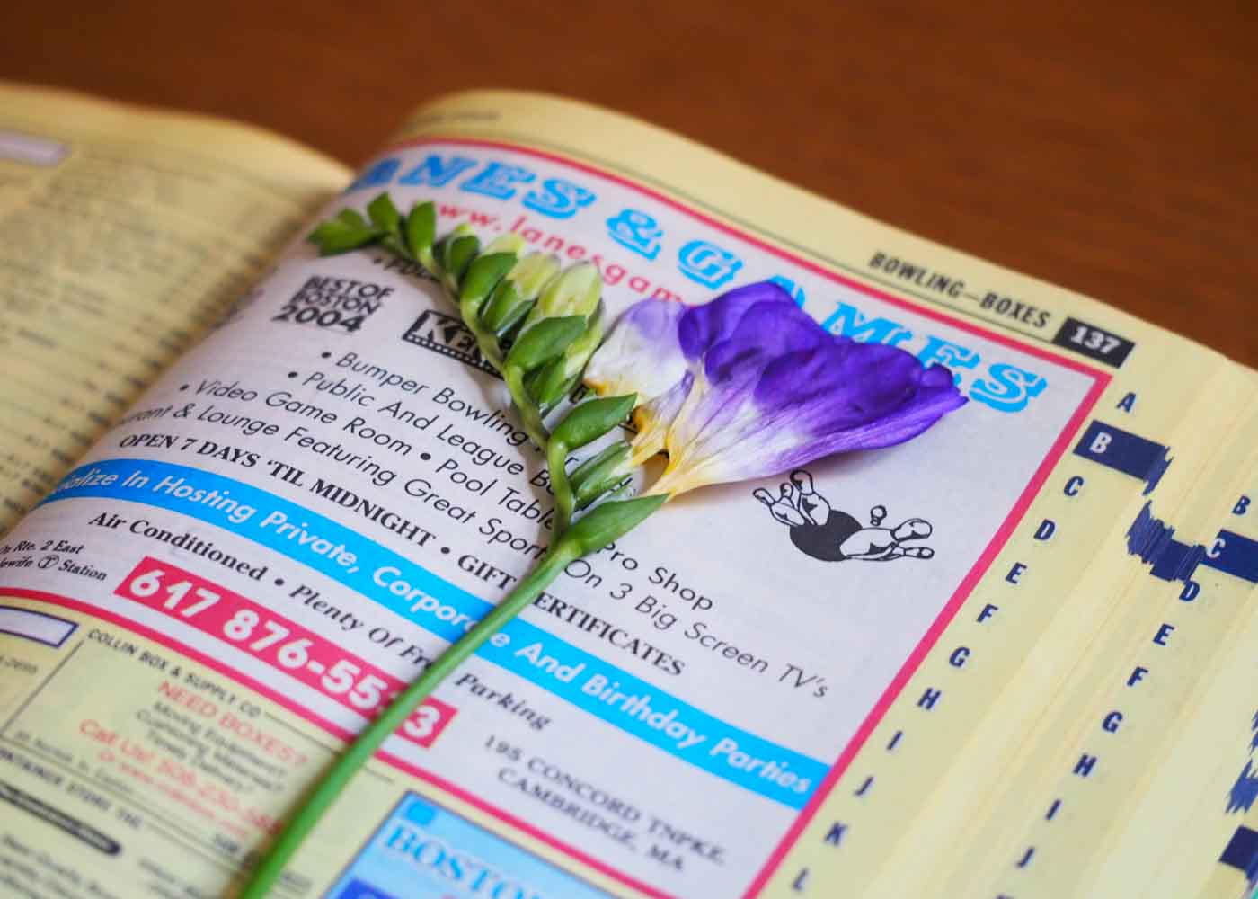 Drying flowers: inserting a sprig of freesia into our phone book.