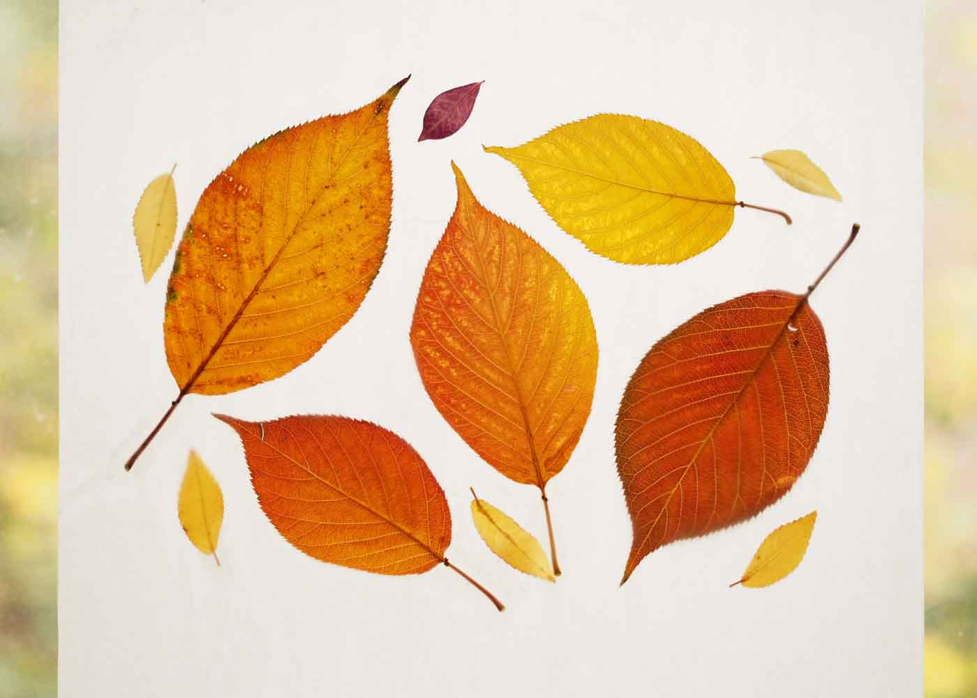 An orange and yellow leaf palette made this wax sheet pop.