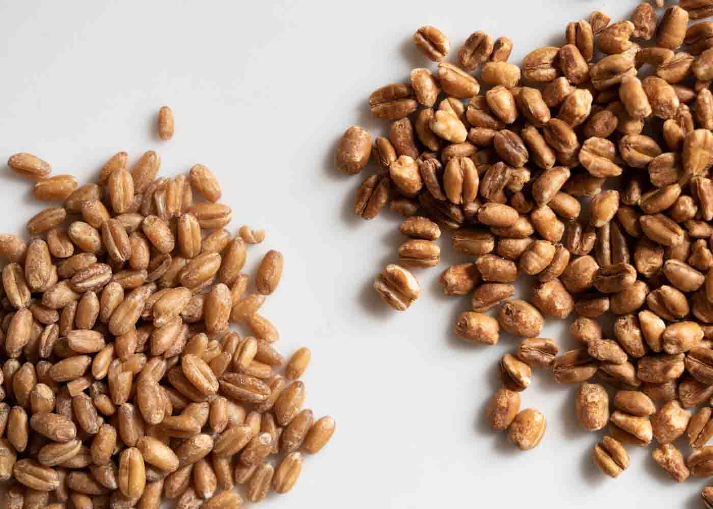 Wheat berries: popped (right) and unpopped (left).