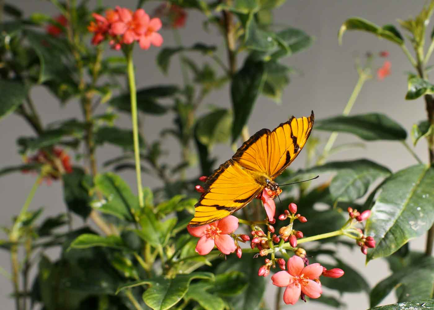 A butterfly kit is both a fun and educational gift.